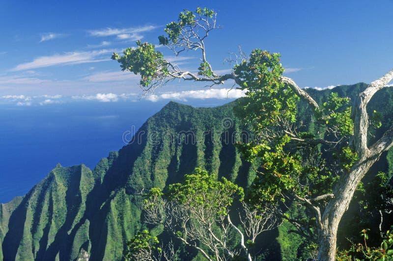 树和山在Na梵语海岸线,考艾岛,夏威夷 免版税库存照片