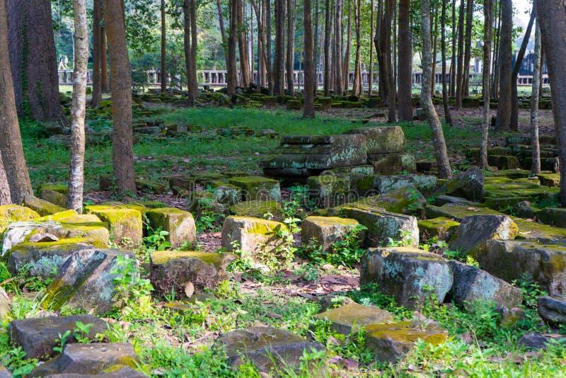 树和岩石在公园 库存图片