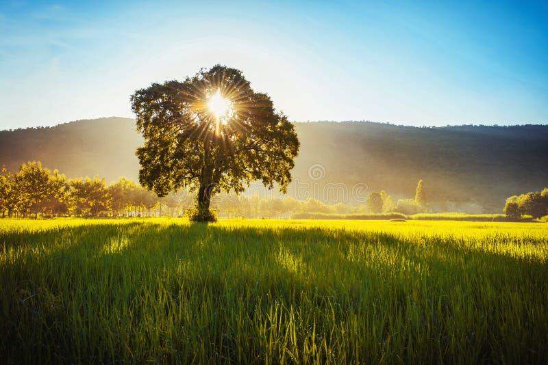 树和日出在山 免版税库存照片