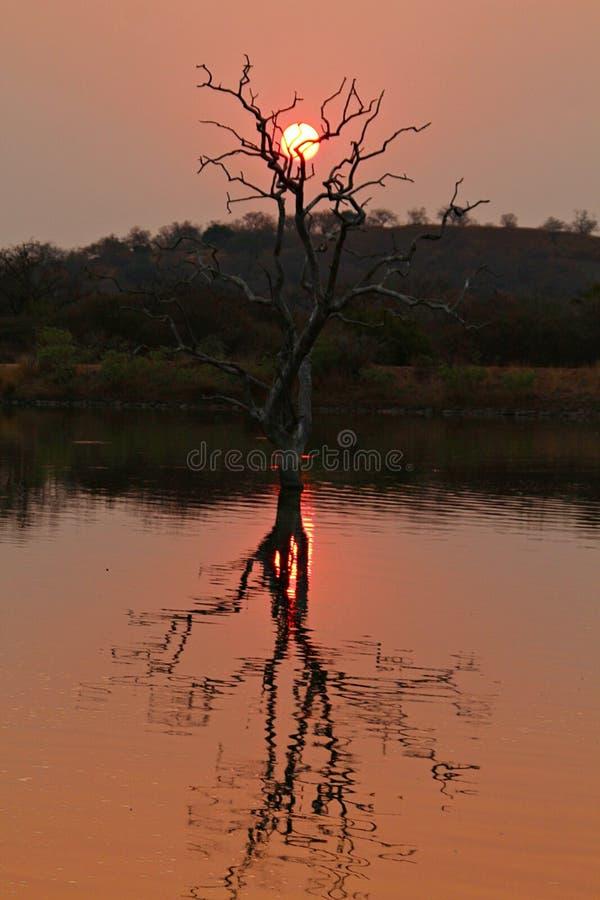 树和日落在磅 库存图片
