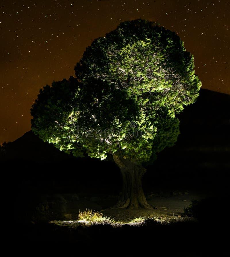 树和星 图库摄影