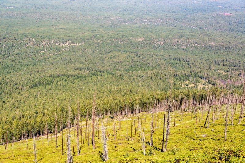 树和更多树 免版税图库摄影