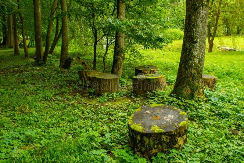 树和树桩在公园 库存照片