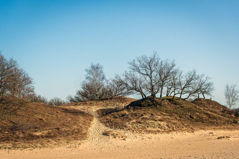 树和欧石南丛生的荒野在春季的开始在荷兰 免版税库存图片