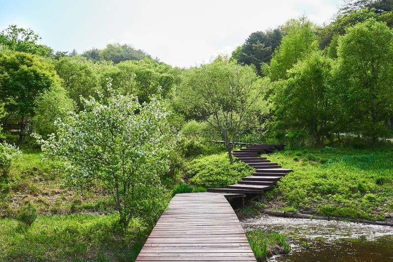 树和水围拢的木路在Pyunggang植物园里在普天,韩国 免版税库存图片
