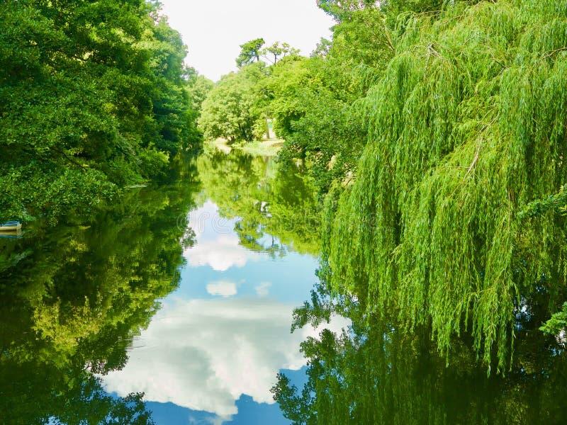 树和河 库存图片