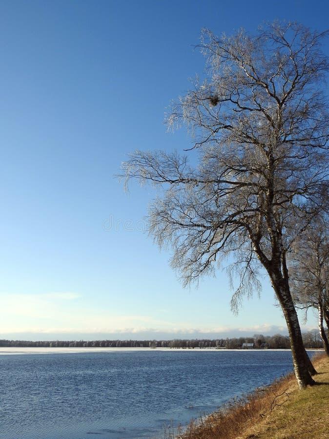 树和洪水区域,立陶宛 库存图片