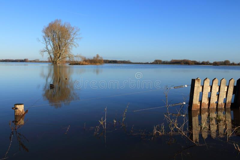 树和电篱芭在被充斥的河ijssel 免版税库存图片