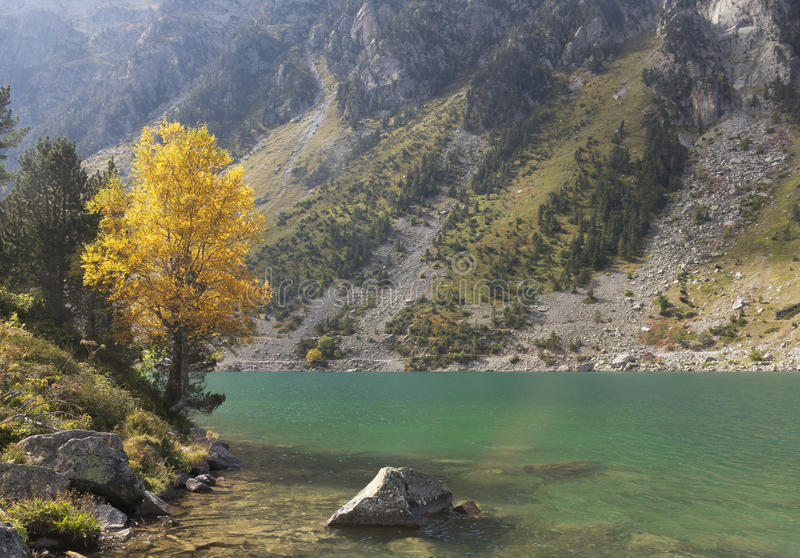 树和秋天在湖Gaube,比利牛斯的自然公园 免版税库存照片