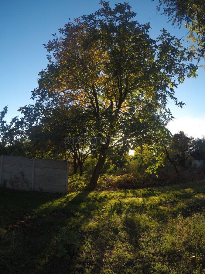 树和篱芭 库存照片
