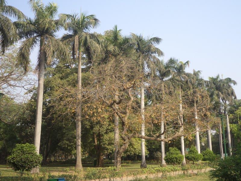 树和绿叶:Lodi庭院 免版税库存照片