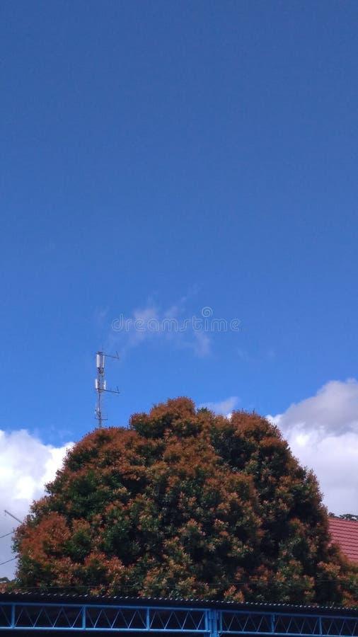 树和网络硬件 免版税库存图片
