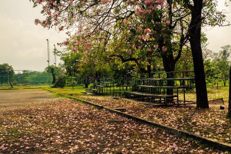 树和老正面看台风景在领域的边 库存图片