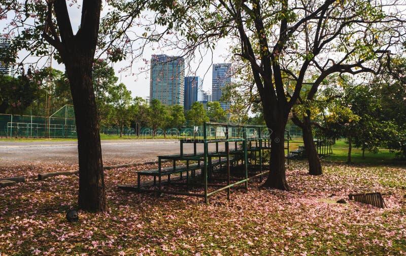 树和老正面看台风景在领域的边 免版税库存照片