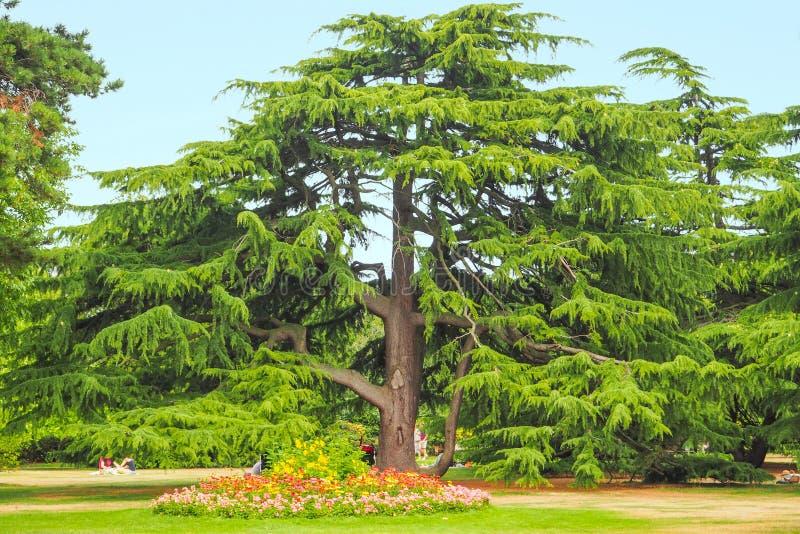 树和花在格林威治停放,伦敦在一个晴朗的夏天da 免版税图库摄影