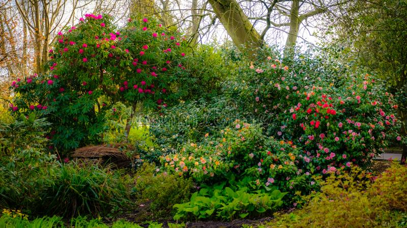 树和花在绽放 图库摄影