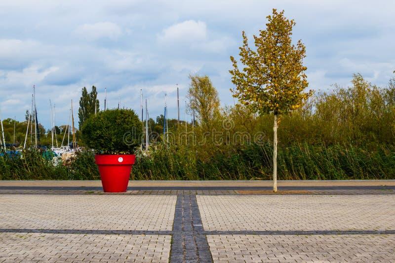 树和花盆 免版税库存照片