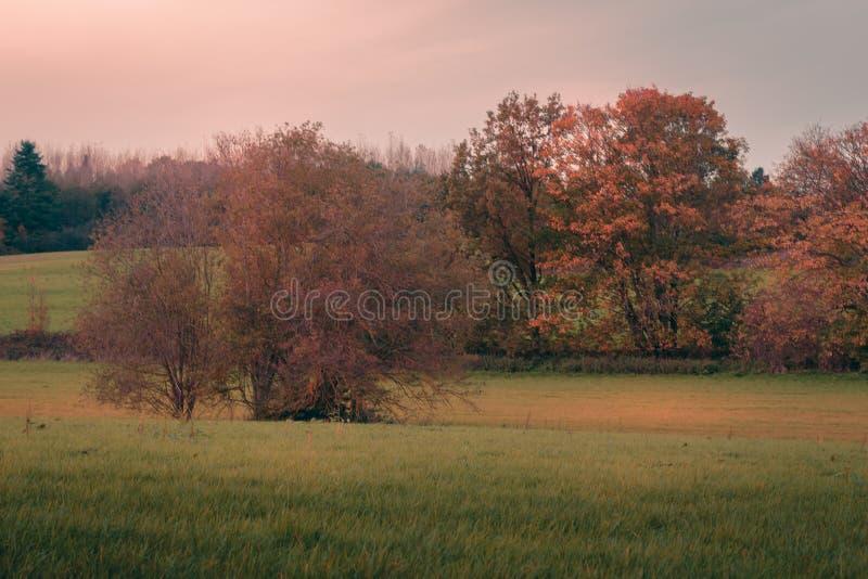 树和草甸秋天的 图库摄影
