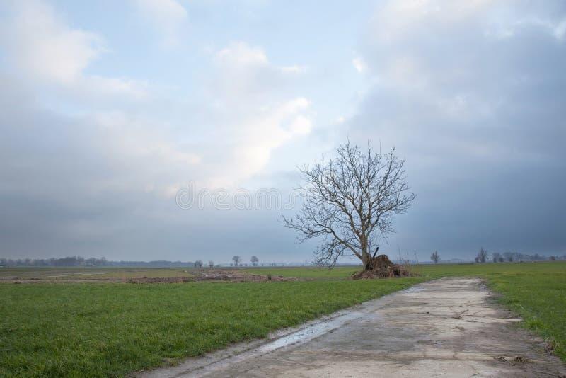 树和草甸荷兰近的houten 免版税库存图片