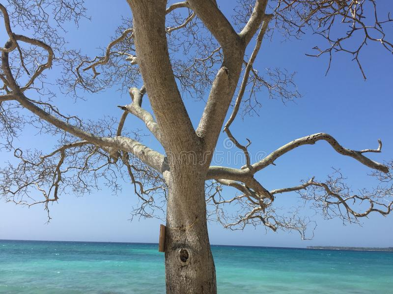 树和蓝色海罗萨里奥海岛的 库存照片