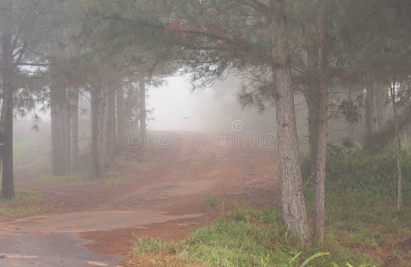 树和雾01的剪影 库存图片