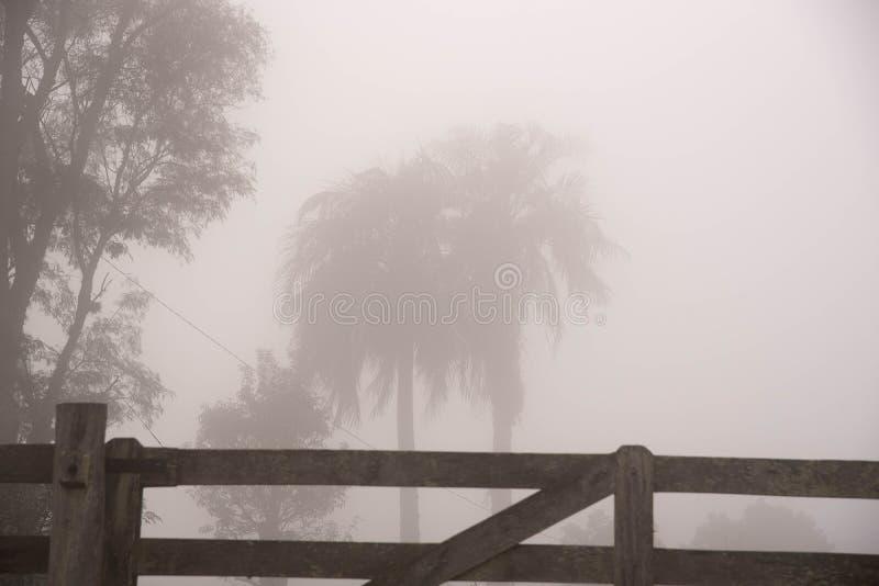 树和雾03的剪影 库存图片