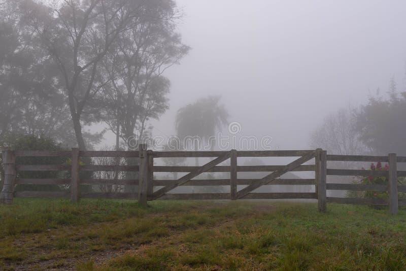 树和雾05的剪影 库存照片