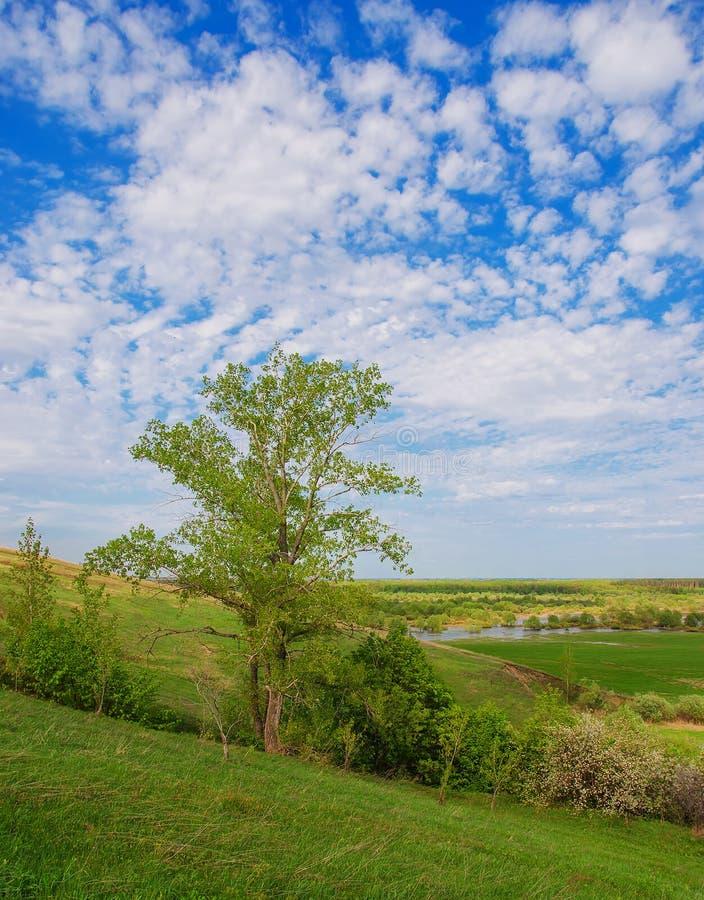 树和领域在一个晴朗的夏日 Voroninsky国家公园,坦波夫州,俄罗斯 库存照片