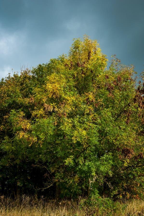 树和风雨如磐的天空 免版税库存照片