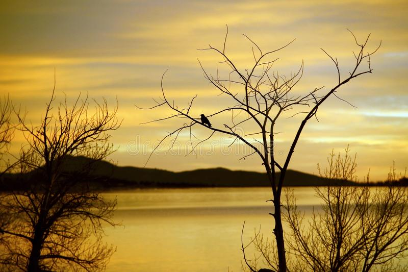 树和鸟现出轮廓反对天空 免版税图库摄影