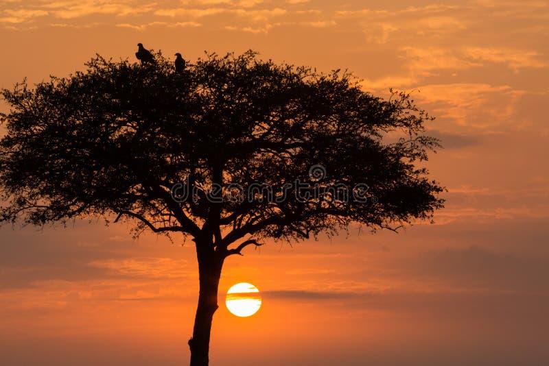 树和鸟现出轮廓在日出 免版税库存照片