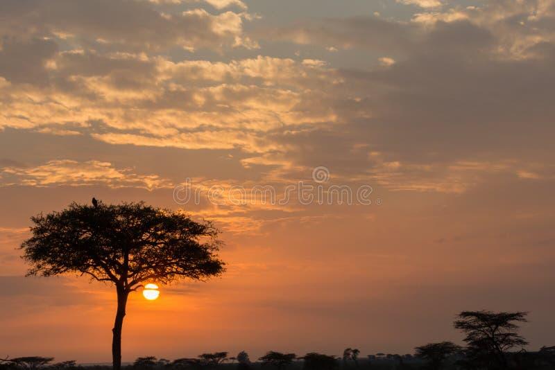 树和鸟现出轮廓在日出 库存图片