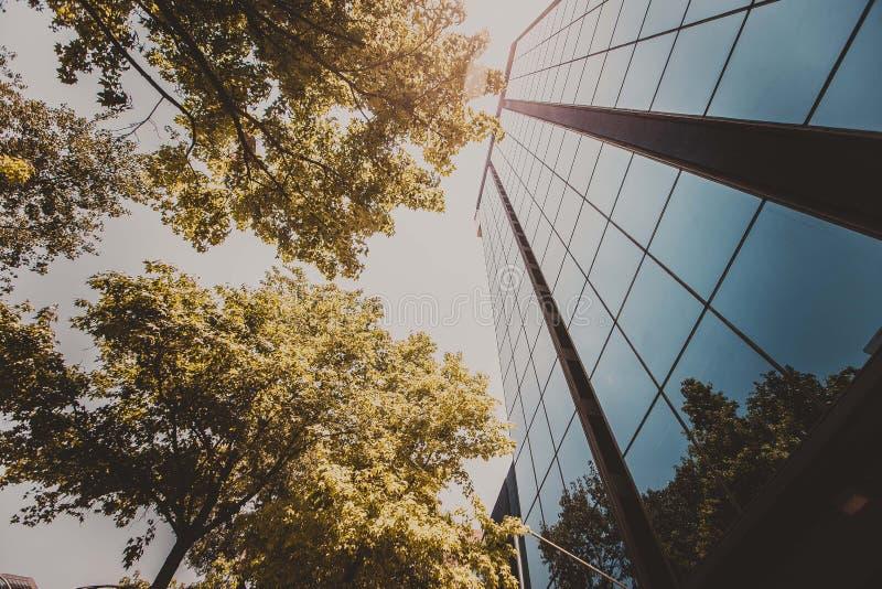 树和玻璃 免版税库存照片