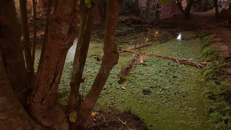 树和geen水alge 免版税库存图片