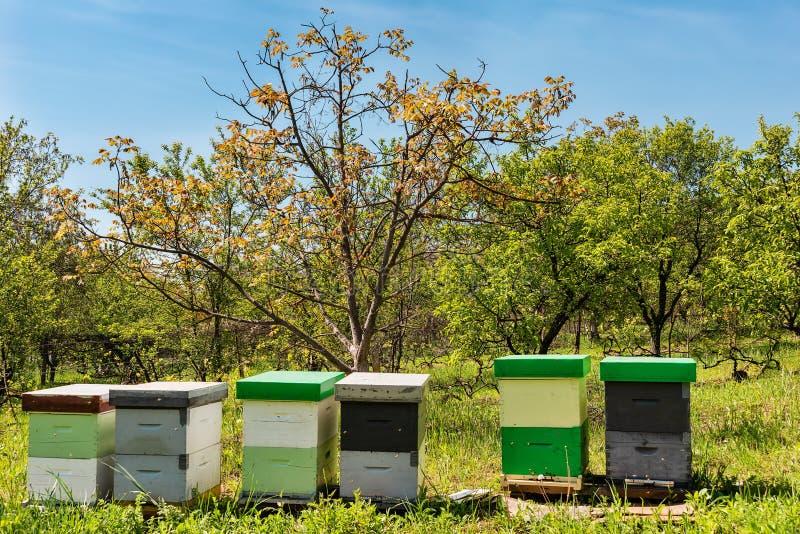 树围拢的蜂蜂房在一好日子 木蜂箱行蜂的 免版税图库摄影