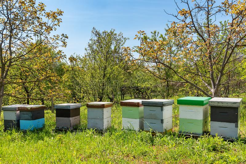 树围拢的蜂蜂房在一好日子 木蜂箱行蜂的 库存照片
