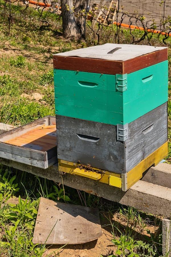 树围拢的蜂蜂房在一好日子 木蜂箱行蜂的 免版税库存照片