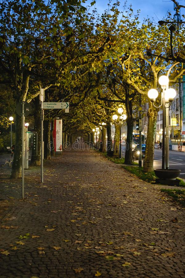 树围拢的街道的透视图在秋天 免版税库存图片