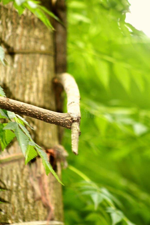 树图片 库存照片