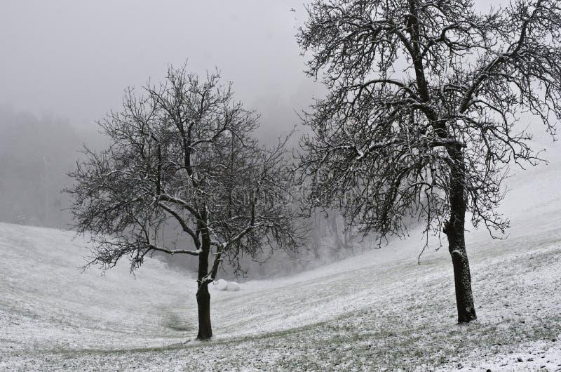 树在一个凉快的多雪的早晨 免版税库存图片