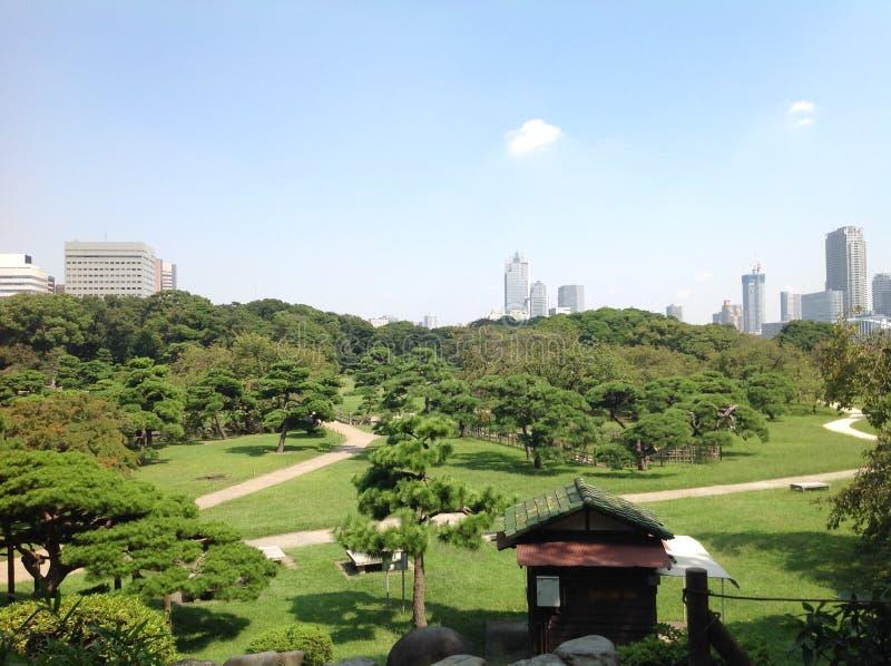 树在一个绿色公园在东京 库存图片