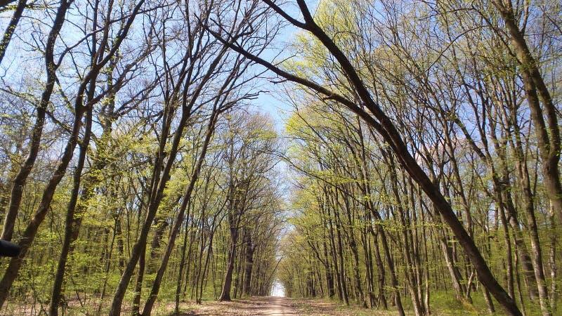 树在一个绿色森林里在春天 库存图片