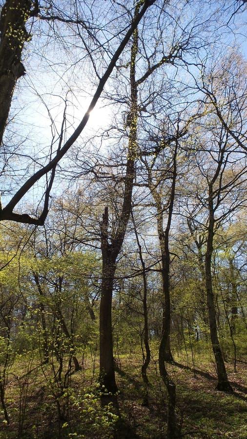 树在一个绿色森林里在春天 免版税图库摄影