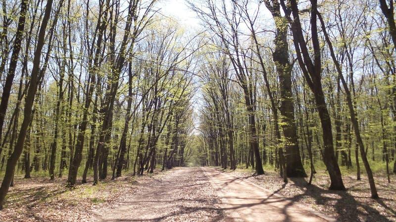 树在一个绿色森林里在春天 免版税库存图片