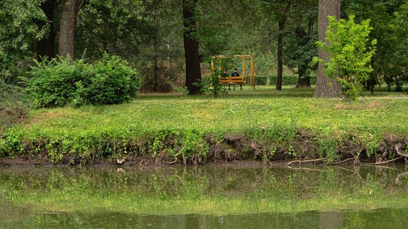 树在公园增长在池塘附近 免版税库存照片