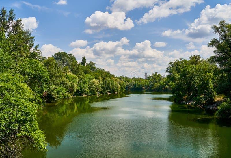 树在公园增长在河附近 库存图片