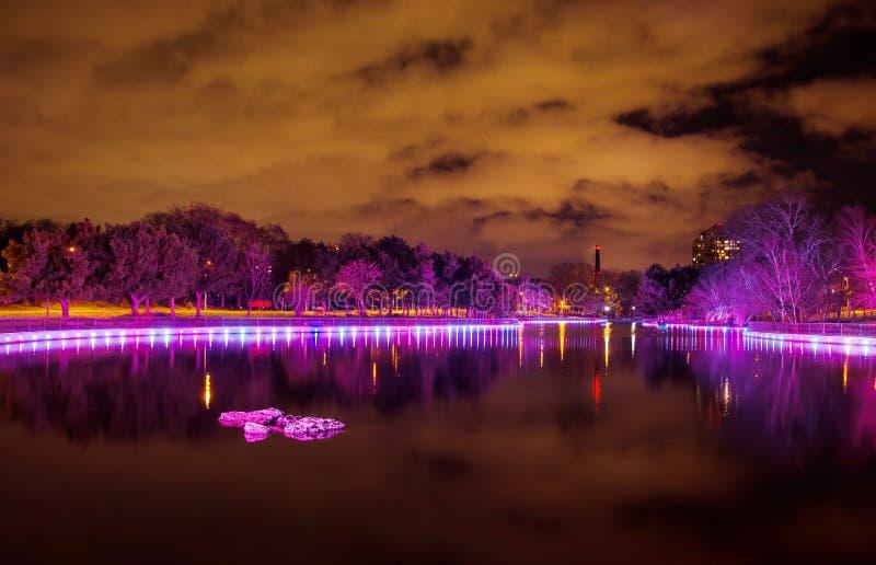 树在公园是紫色的 免版税库存图片