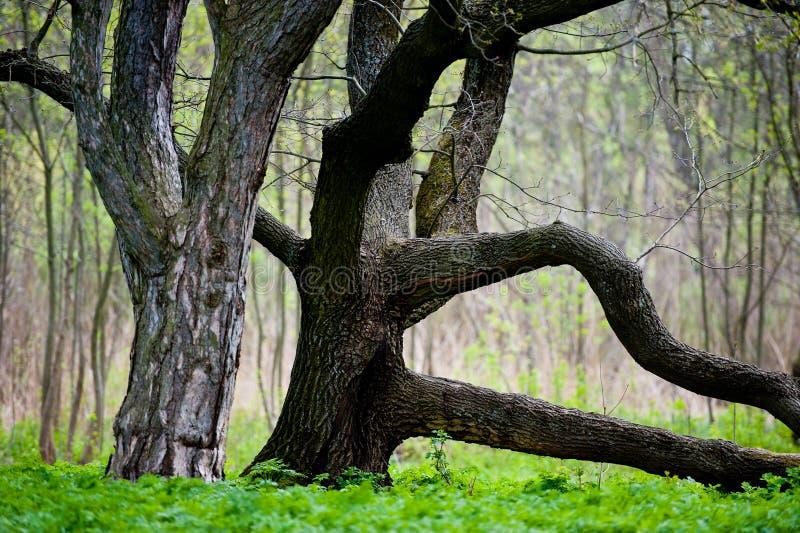 Download 树在公园 库存照片. 图片 包括有 bossies, 关闭, 植物群, 草甸, 绿色, 叶子, 结构树, 春天 - 30337576
