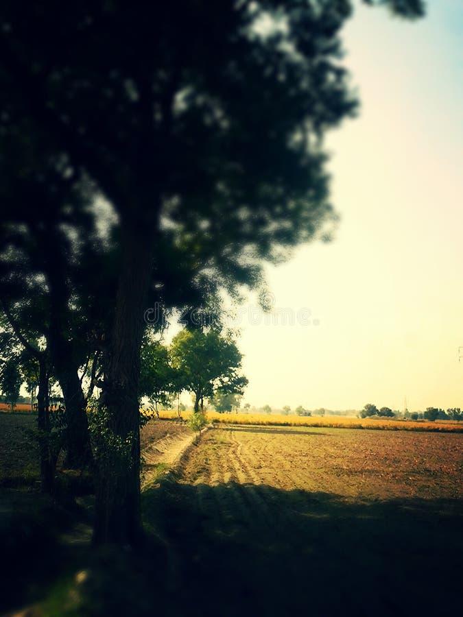 树在农场 库存图片
