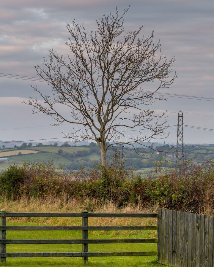 Download 树在农村北爱尔兰农田里 库存图片. 图片 包括有 草甸, 小山顶, 背包, 本质, 农村, 横向, 秋天 - 72374523